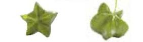 グリーンナッツの実