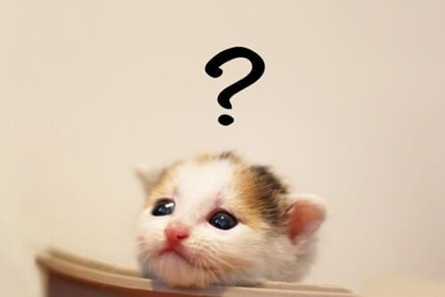 疑問に思っている子猫