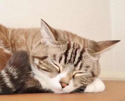 睡眠時間をしっかりとる猫